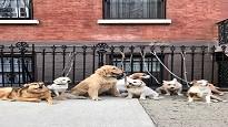 Assicurazione cane 2020 obbligatoria