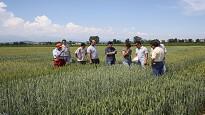 Contratto cooperative consorzi agricoli