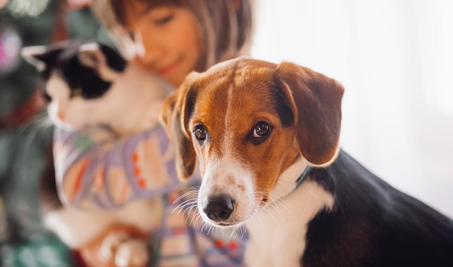 Animali in condominio, regole e leggi attuali in vigore