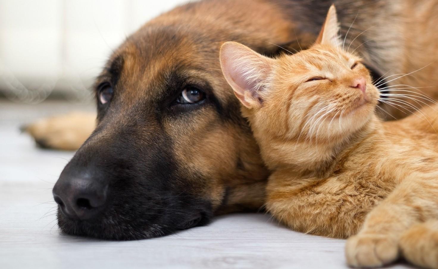 Assicurazioni cani e gatti. Cosa coprono e offerte a confronto 2019