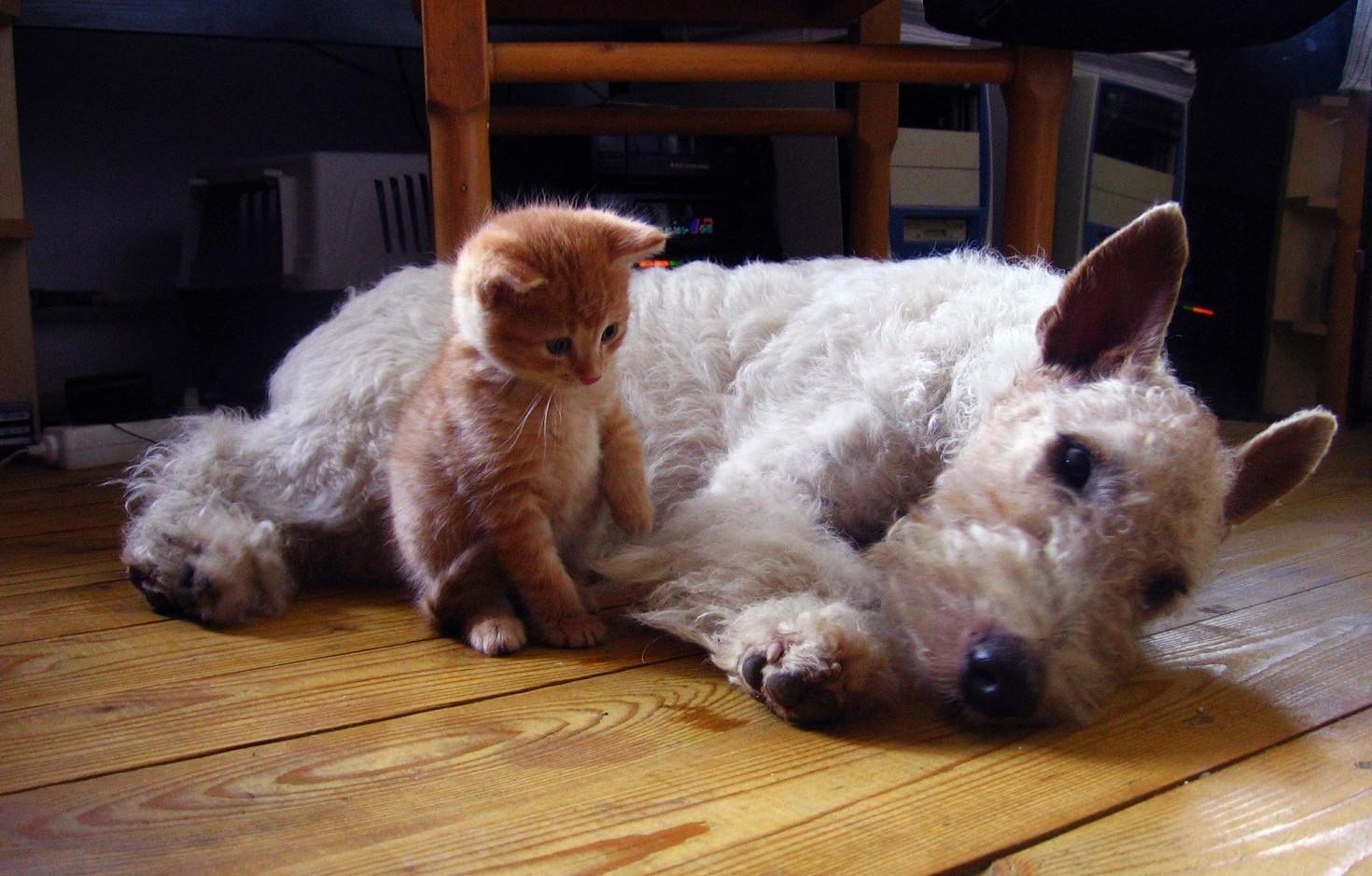 Cosa fare se muore un cane, gatto o animale domestico. Procedure 2020 da rispettare