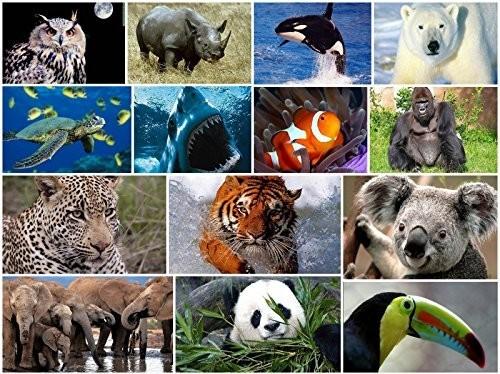 Gli animali a rischio d'estinzione nel 2018