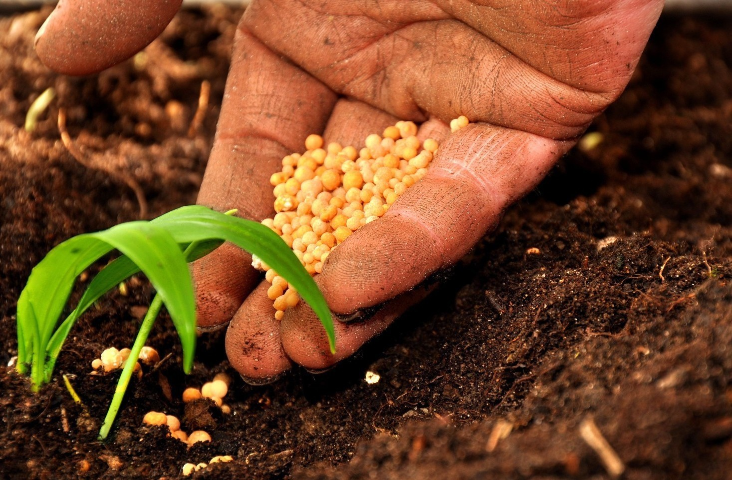 Lavorare nel settore agricolo, contratto CCNL come funziona