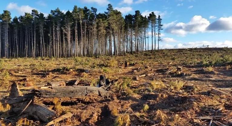 Lo stato attuale della deforestazione nel mondo