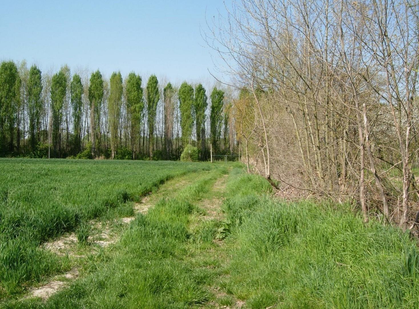 Usucapione terreni agricoli come funziona, leggi e norme in vigore 2020