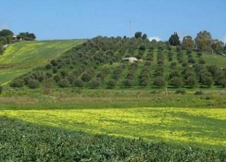 Imu terreni agricoli e non 2014-2015: ch
