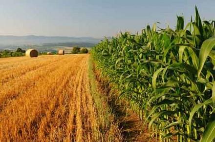 Imu terreni agricoli e non 2014-2015: no