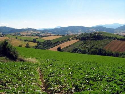 IMU terreni agricoli e non: interventi,