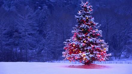 Immagini Auguri di Natale pi� belle, sim