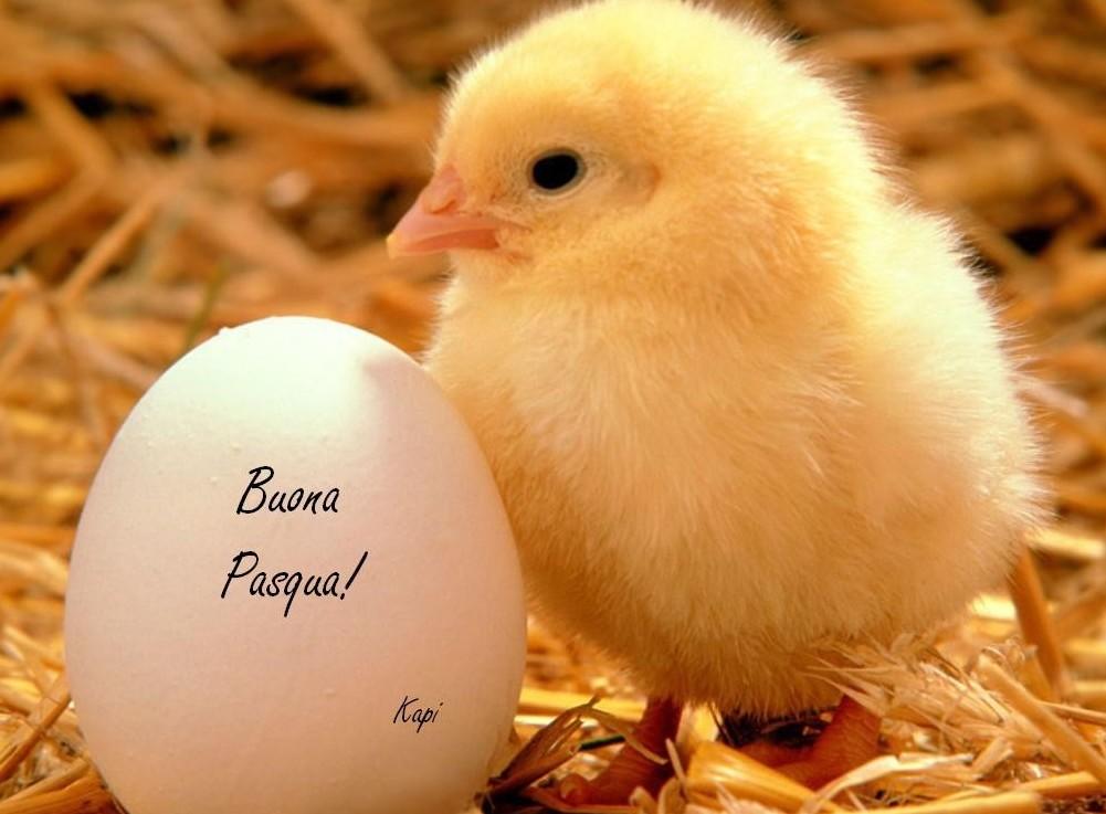 Auguri di Pasqua immagini, frasi, testi,