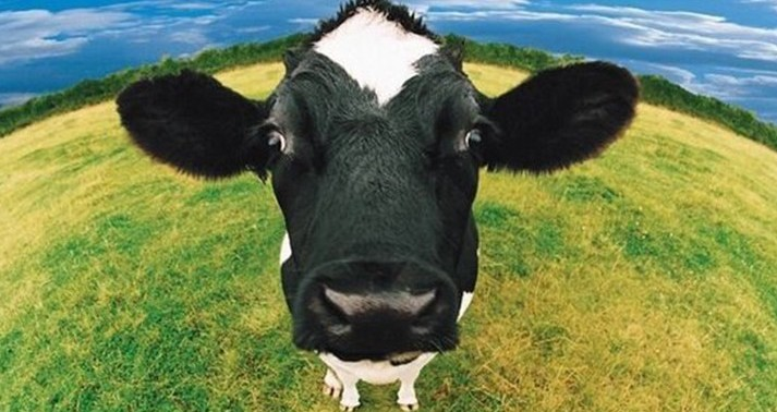 Bill Gates, vacche e polli super per ipe