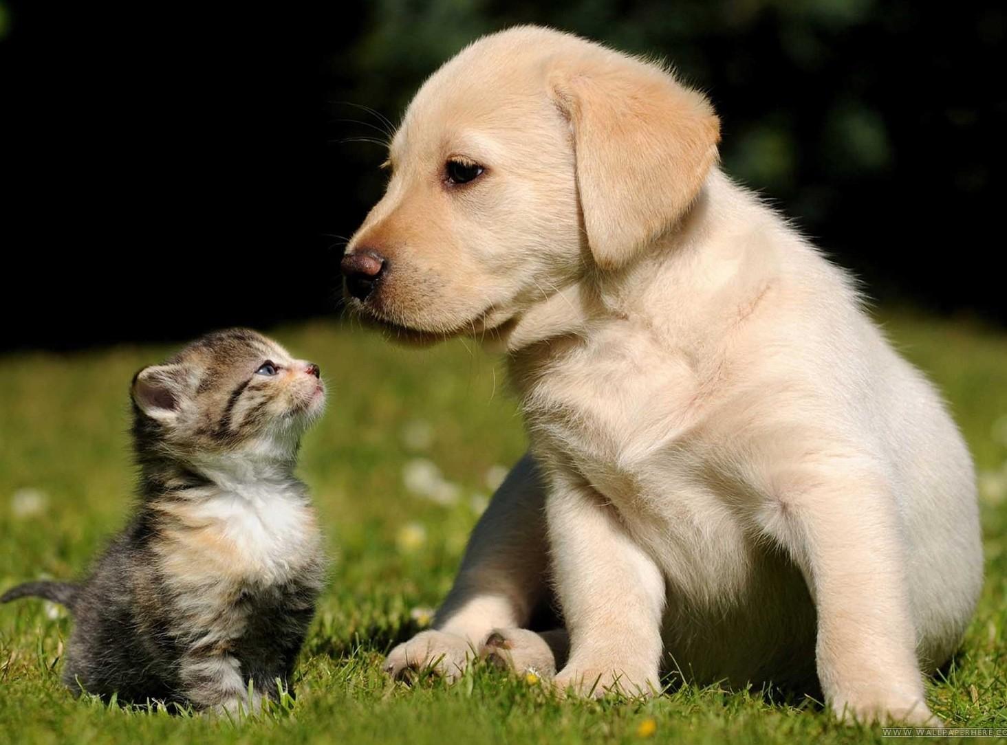 Cani e gatti sono come un prodotto quals