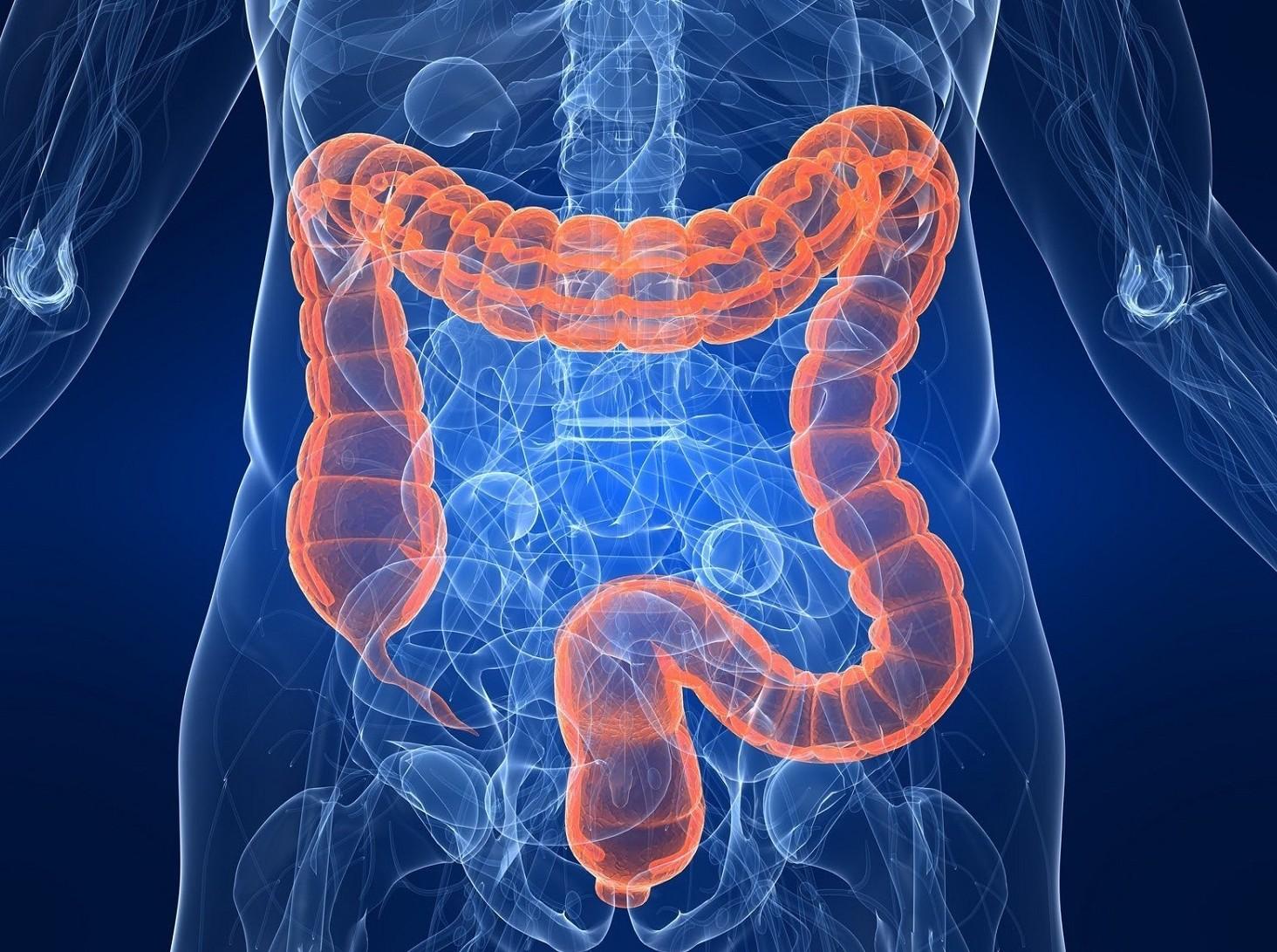 Dieta: intestino è fondamentale per una