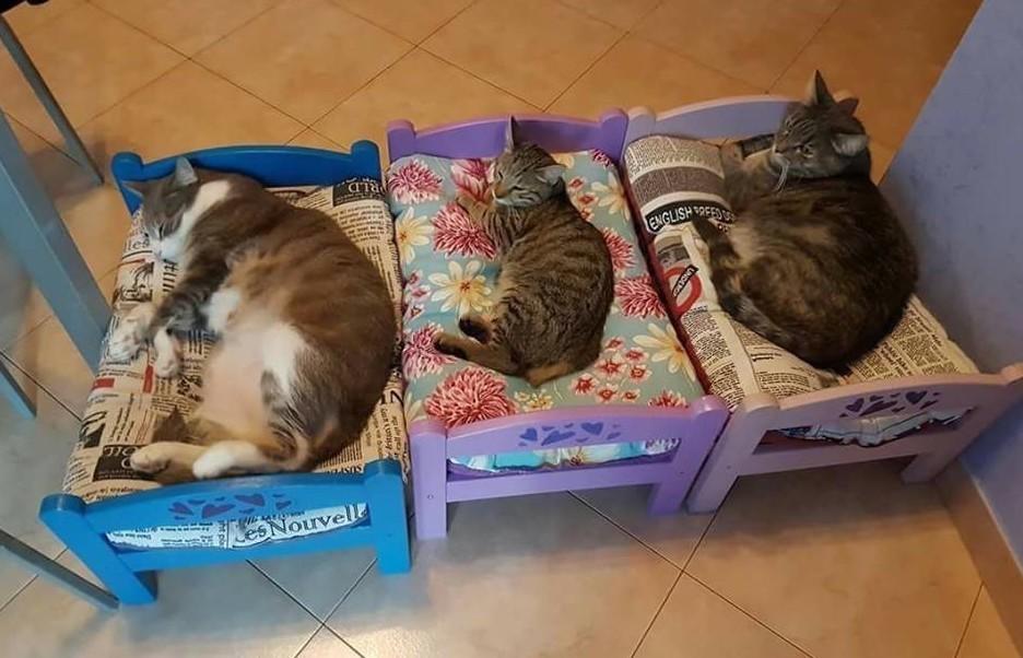 Mobili Per Gatti Fai Da Te : Ikea cani e gatti lancio linea e vendita online tutti suoi mobili