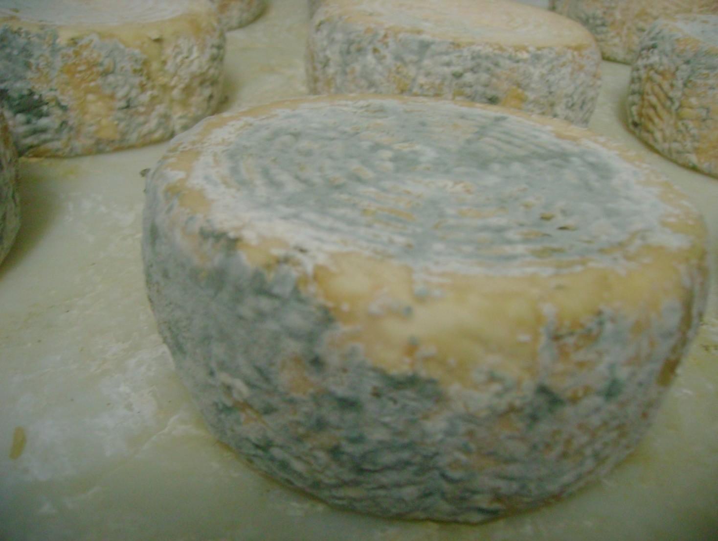 Muffe e ammoniaca formaggi infetti: bloc