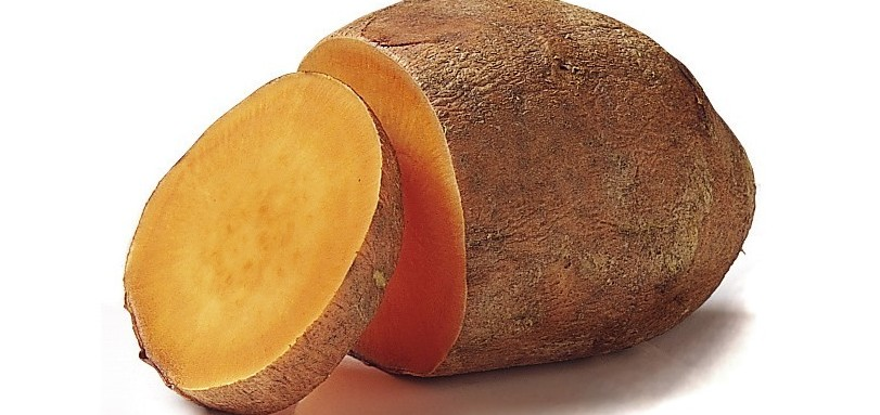 Ingegnere che ha creato patata Ogm da an