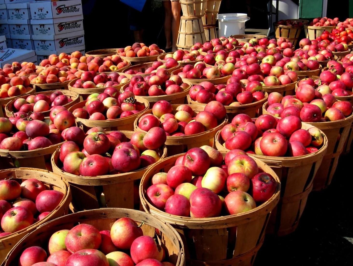Pesticidi nelle mele in Italia, grave al