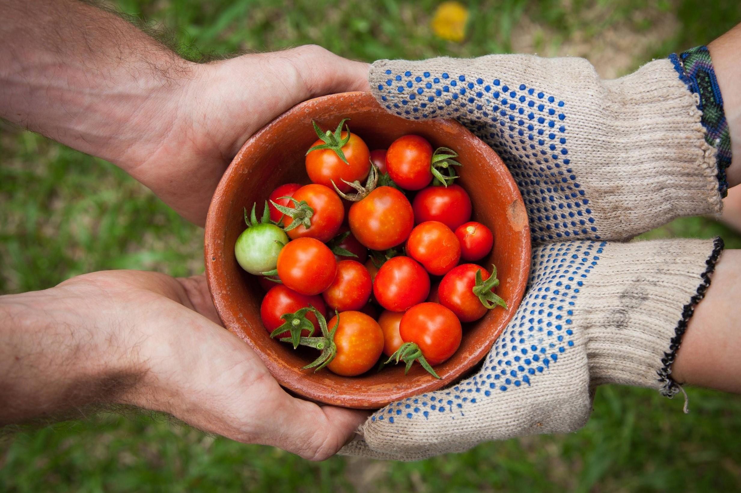 Pomodori, nuovo test marche vendute nei