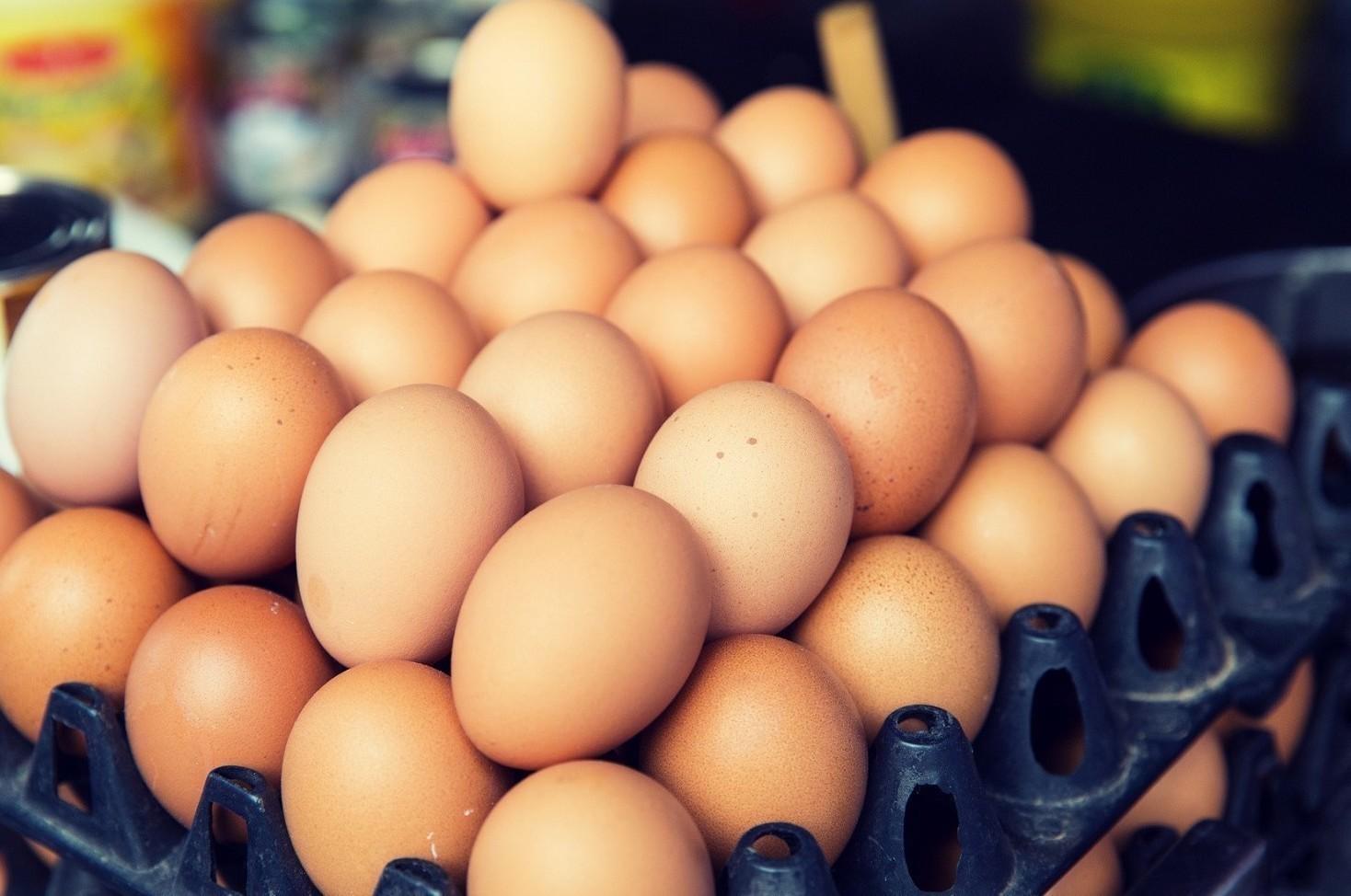 Uova contaminate: Fipronil si usa ancora