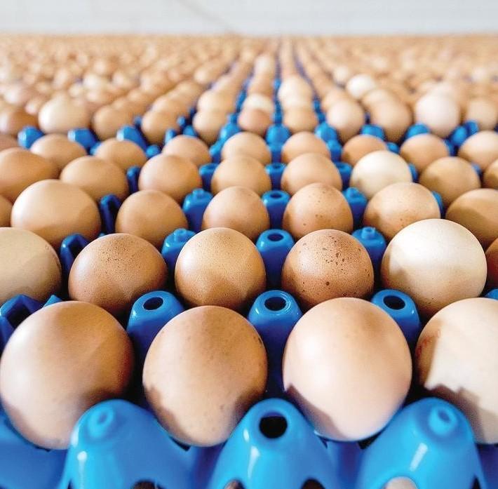 Uovo vegano, benefici per tutti. Realizz