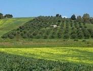 Imu terreni agricoli e non 2014-2015: chi deve pagare e chi no. Come verificare. Regole e calcolo pagamento scadenza 10 Febbraio