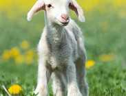 Auguri di Pasqua frasi, video, foto, sms, Facebook, biglietti, cartoline, poesie, email,originali, religiosi,divertenti,simpatiche
