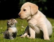 Cani gatti cambio se difettosi