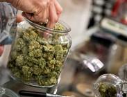 Cannabis terapeutica, cannabis legale, terapia del dolore, Servizio sanitario nazionale