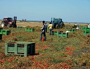 bonus 600 lavoratori agricoli braccianti coronavirus