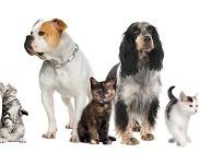 Detrazioni veterinario 2020