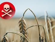 glifosfato è cancerogeno?