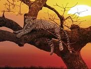 Il lavoro a macchie di leopardo