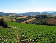 Imu terreni agricoli: conviene non pagare oggi ed attendere. Proroga di fatto c'è per tutti seppur ufficiale in alcuni Comuni