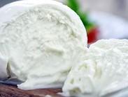 Mozzarella di bufala: orgoglio italiano