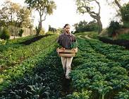 Naspi Dis Coll agricole 2020 regole