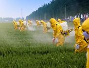Cibi con pesticidi in Itakia