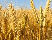 Accordi filiera tra pastai e agricoltori