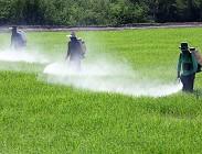 Pesticidi quantità presenti alimenti