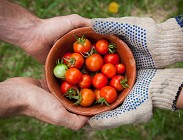 Quali pomodori comprare