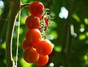 Pomodoro produzione insostenibile