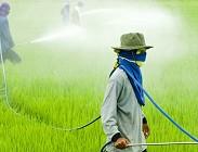 Cibi e pesticidi: i risultati