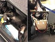 cane, cucciolo, aerei, imbarco