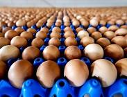 Uova contaminate Fipronil