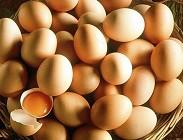 uova contaminate, Italia, Ue, Europa