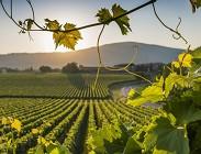 Vino, produzione, qualità, bollicine, DOC, DOCG